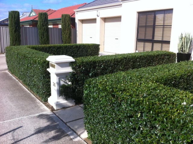 Services adelaide lawns gardens adelaide lawns gardens for Gardening services adelaide